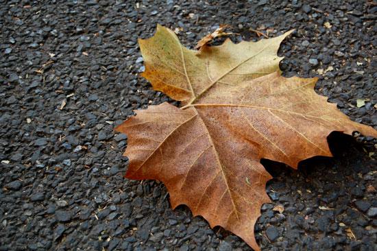 Autumn Leaves, Tokyo